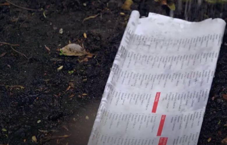jornal velho