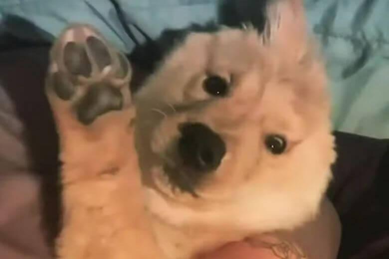 Bonita cachorrinha de uma orelha Instagram